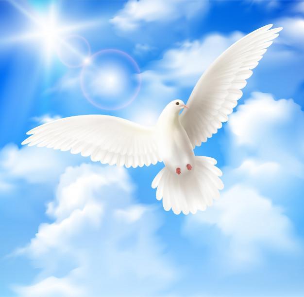 Pigeon blanc ciel bleu nuages 1284 32636
